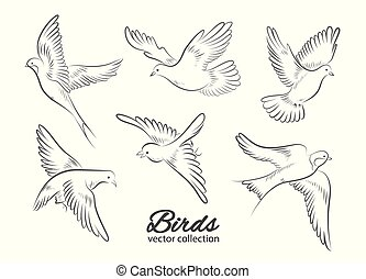 Set of hand drawn birds isolated on white background. Vector...
