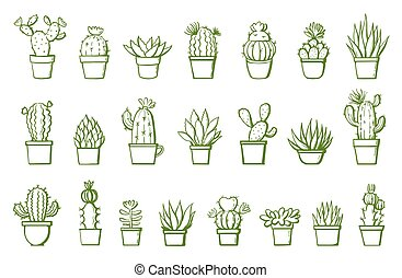 set of hand drawn cactus on white. vector illustration