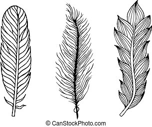 Set of hand drawn feathers. Vector illustration.