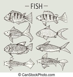 Set of hand drawn fish, Healthy food drawings set elements for menu design. Vector illustration.