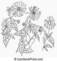 Set of hand drawn flowers isolated on white background.