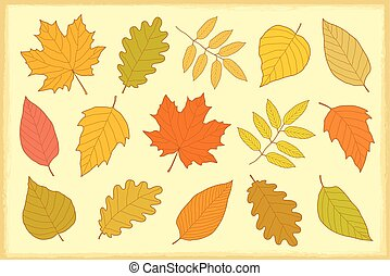 set of hand drawn isolated autumn leaves