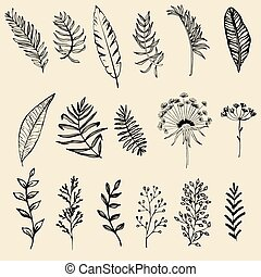 Set of hand drawn leaf vector illustration, flower lineart isolated graphic elements for your design.