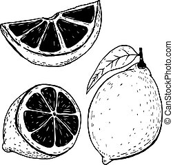 Set of hand drawn lemons isolated on white background. Vector il