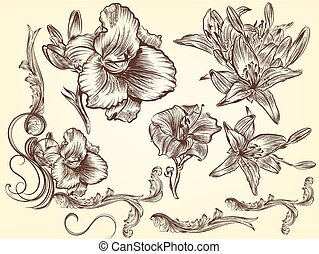 Set of hand drawn lily for design
