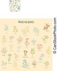 Set of hand drawn medicinal herbs