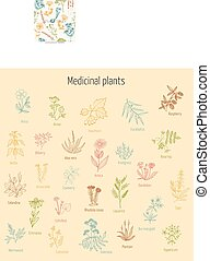 Vintage collection of hand drawn medicinal herbs and plants. Vector illustration.