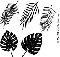 Set of hand drawn palm leaves isolated on white background. Vector illustration