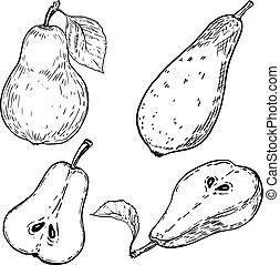 Set of hand drawn pears on white background. Design elements for