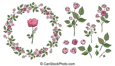 Set of hand drawn pink rose branches with green leaves. Collection of floral vector elements for romantic design isolated on white for cards, invitations. Floral frame wreath made of roses
