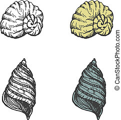 Set of hand-drawn seashells. vector eps8
