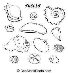 Set of hand drawn shells