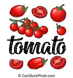 Set of hand drawn tomatoes and calligraphic lettering. Engraving vintage