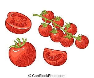 Set of hand drawn tomatoes. Branch, whole and slice.