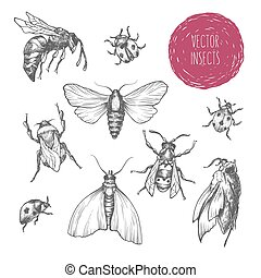 Set of hand drawn vector insects.