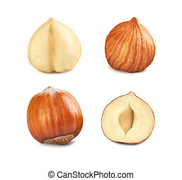 set of hazelnuts on a white background