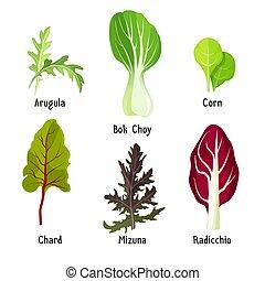 Set of healthy edible herbs green arugula, bok choy, corn...