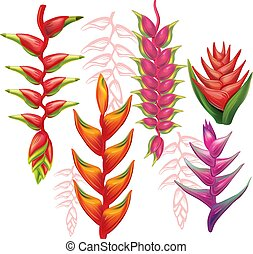 Set of Heliconia flowers