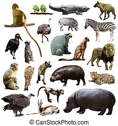 Set of hippo and other African animals