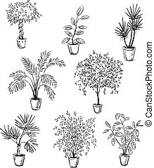 Set of home flowers in pots, vector drawing