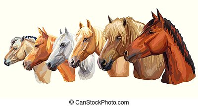 Set of horses breeds 5 - Set of colorful vector portraits of...