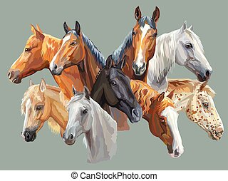 Set of horses breeds - Set of colorful vector portraits of...