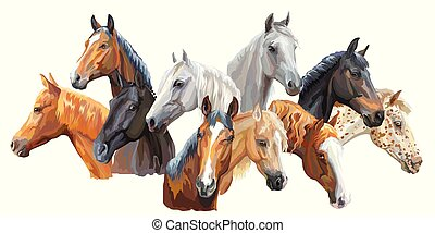 Set of horses breeds3 - Set of colorful vector portraits of...