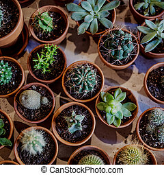 Set of house indoor succulent plants and various  cactus in different pots. A tray of Succulents. Top view