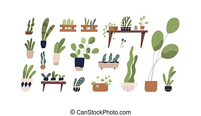 Set of houseplants in pots vector flat illustration. ...