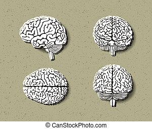 set of human brain.