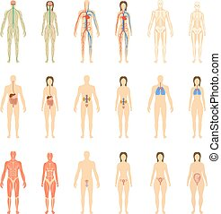 Set of human organs and systems of the body vitality and pregnancy stages. Vector illustration.