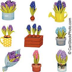 Set of images of hyacinth. Vector illustration on white background.
