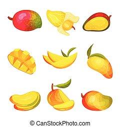 Set of images of mango. Vector illustration on white background.