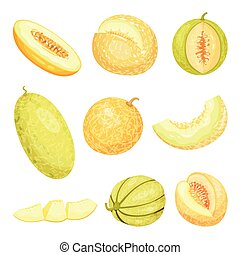 Set of images of melons. Vector illustration on white background.