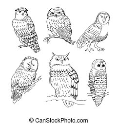 Set of images of owls painted in a realistic style