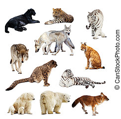 Set of images of predators. Isolated over white background with shade
