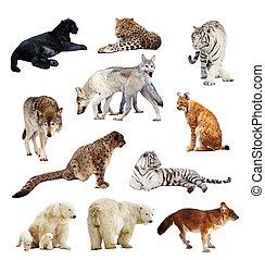 Set of images of predators