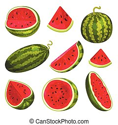 Set of images of watermelons. Vector illustration on white background.