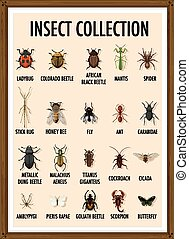 Set of insect collection in wooden frame illustration
