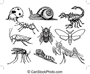 set of insects - set of sketch illustration of different...
