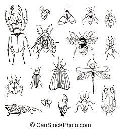 set of insects , sketch