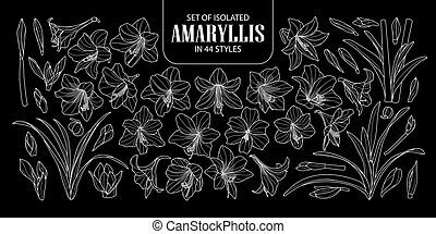 Set of isolated Amaryllis or Hippeastrum in 44 styles. Cute...