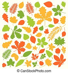 Set of isolated colorful autumn leaves on a white background