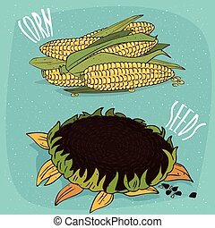 Set of isolated corn ears and sunflower
