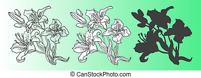 Set of isolated design elements of Lily flowers.