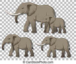 Set of isolated elephants on transparent background