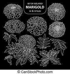 Set of isolated marigold in 6 styles. Cute hand drawn flower vector illustration only white outline.