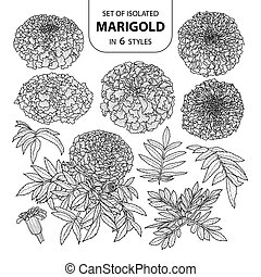 Set of isolated marigold in 6 styles. Cute hand drawn vector illustration in black outline and white plane.