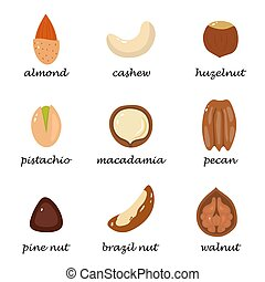 Set of isolated nuts on white background in cartoon style.