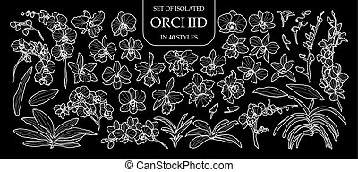 Set of isolated orchid in 40 styles. Cute hand drawn flower vector illustration only white outline.